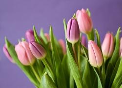 На что необходимо обращать внимание при покупке живых цветов?