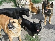 Внимание!!! Отлов безнадзорных собак