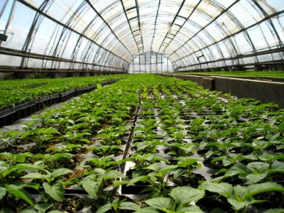 Выплата субсидий за производство реализуемой продукции животноводства и за строительство теплиц