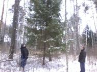 В лес за елкой