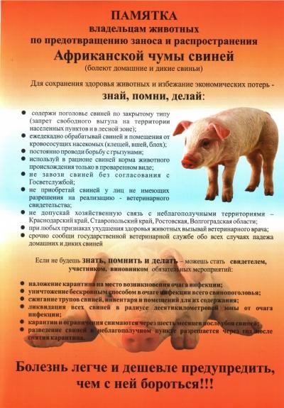 Информация населению по заболеванию домашних животных африканской чумой