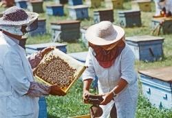В Госдуму внесен законопроект о защите пчел от пестицидов