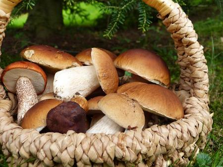О мерах профилактики отравления грибами, правилах сбора и заготовки грибов