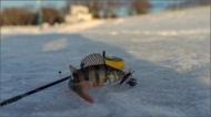 Приглашаем на соревнования по зимней рыбалке