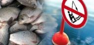 Запрет рыбной ловли