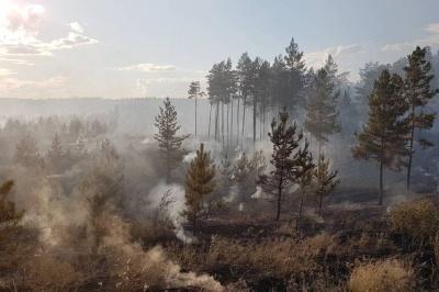 Чрезвычайная пожарная опасность лесов объявлена в 12 муниципальных образованиях Самарской области