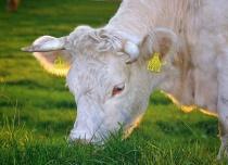 Новые селекционные достижения в животноводстве