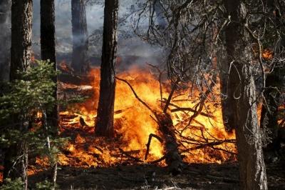 Лесные пожары – бедствие