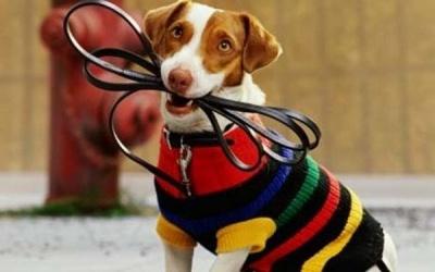 Административная ответственность в Тульской области за нарушение правил выгула собак.