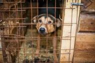 Об отлове безнадзорных собак