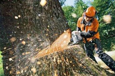 ПАМЯТКА  об ответственности граждан за незаконную рубку лесных насаждений при заготовке древесины для собственных нужд