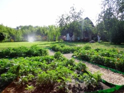 Как отличить сад от огорода?