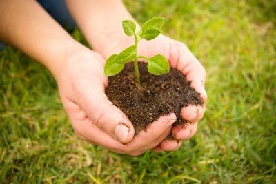 Необходимо беречь землю от зарастания сорной растительностью!