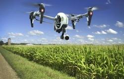Коровы-роботы и растения с самополивом: какие цифровые изменения произойдут ждут в сельскохозяйственном сектор в ближайшем будущем?