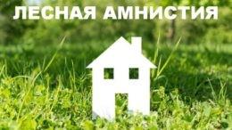 «Горячая» линия по вопросам «лесной амнистии» пройдет 12 июля