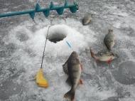 Прошли соревнования по зимней рыбалке.