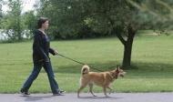 О содержании домашних животных и мерах по обеспечению безопасности населения