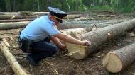 Чем чревата незаконная вырубка леса?