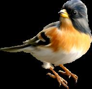 1 апреля Международный День птиц! (Подробнее...)
