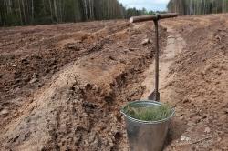 В Кировской области восстановят леса на площади 37 тысяч гектаров