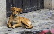 Отлов безнадзорных собак