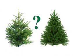 Как выбрать елку?