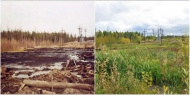 Особенности проведения рекультивации земель, подвергшихся загрязнению и иному негативному воздействию
