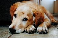 Специалисты БУ ВО «Каширская райСББЖ» напоминают владельцам домашних животных о необходимости вакцинации питомцев против бешенства