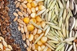 Требования к производству семян