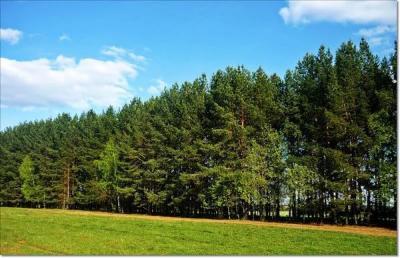 О сохранении полезащитных лесополос