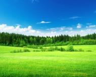 Уголовная ответственность за отдельные виды экологических преступлений