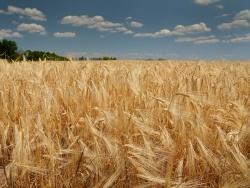 Информация для правообладателей земельных участков сельскохозяйственного назначения