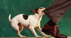 Что делать, если ваше животное покусало человека  или другое животное?