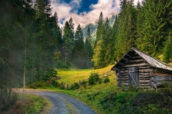 Можно ли без разрешения занять лесной участок для организации пасеки и размещения хозяйственных построек?