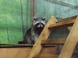 Запрещены контактные зоопарки в торговых центрах