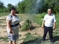 Обнаружен и уничтожен  участок произрастания дикорастущей конопли