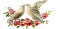 «Голуби России» международная выставка элитных голубей