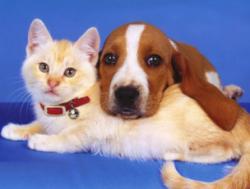 О путешествии с домашними животными