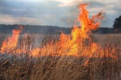 Сжигание сухостоя несет в себе серьезную угрозу