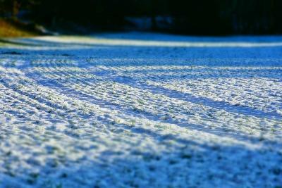 Снегозадержание - как важнейший агротехнический прием