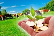 Комитет сельского хозяйства Волгоградской области  предоставляет  информацию по вопросу оформления документов для получения субсидий