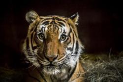 Каких диких животных запрещено содержать в домашних условиях?