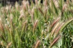 Негативное влияние сорной растительности на сельскохозяйственное производство