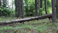 Визуальные признаки состояния деревьев, относящие к валежнику, которые граждане могут заготавливать (собирать) для собственных нужд  на территории Пермского края с 01 января 2019 г.