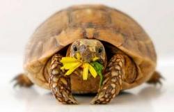 23 мая - Всемирный день черепах