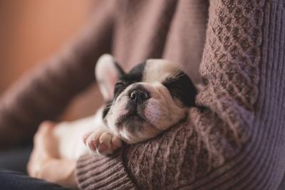 Каковы особенности содержания домашних животных в квартире?