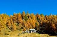 В 2018 году в Костромской области закон о «лесной амнистии»  применялся 27 раз.