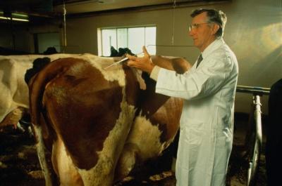 ВНИМАНИЕ !!! Владельцам крупного и мелкого рогатого скота: 3 октября 2017 года - диагностическое обследование