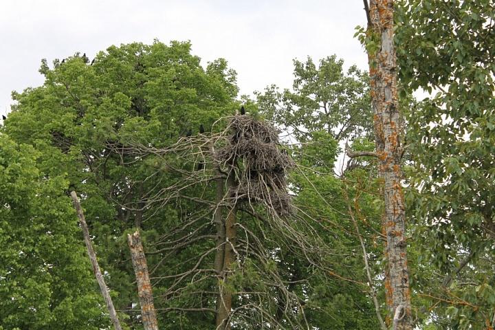Дерево в Поповском саду