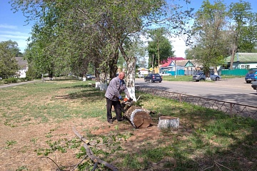 Группа хозяйственного обслуживания и благоустройства занимается поливом саженцев в сквере «Лужайка Лотосов», а    также  спиливают сухие деревья по ул.Советская.